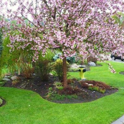 Flowering Tree Landscape Design Flower Gardens by European Garden Design Calgary
