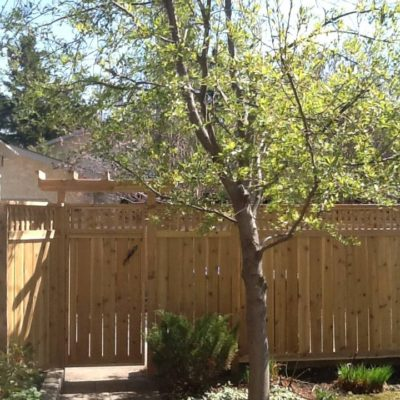 Architectural Fence Design in Decks and Fences by European Garden Design Calgary