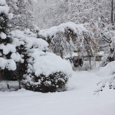 Winter Garden by European Garden Design Calgary
